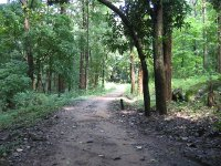 Dhoni Forest